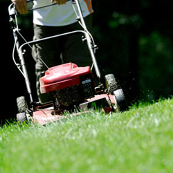 Gas vs. Electric vs. Cordless Lawn Mowers
